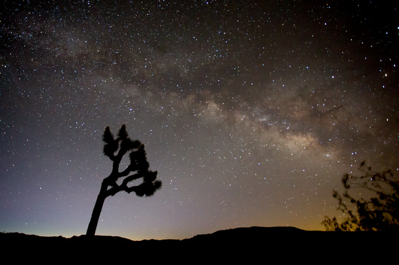 Milky Way over Joshua Tree